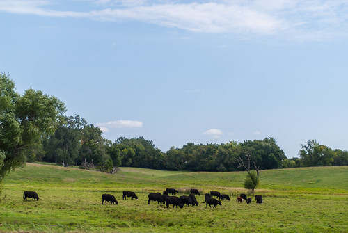 southdakota rural cows country farmland pasture prairie farmfields minnehahacounty slipupcreek