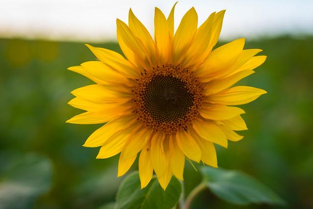 A Healthy Flower [explore 09-24-14]