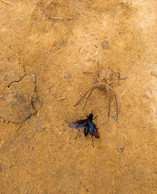 Madagascar5 - 079
