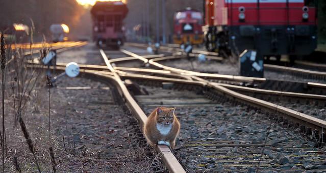 suicide cat