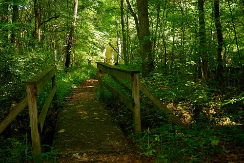 bridge trees ohio summer nature woods hiking path sony august nativeamerican trail alpha mound moundbuilders gravel 2014 a230 tarlton fairfieldcounty ohiobridge crossmound fairfieldcountyhistoricalparks