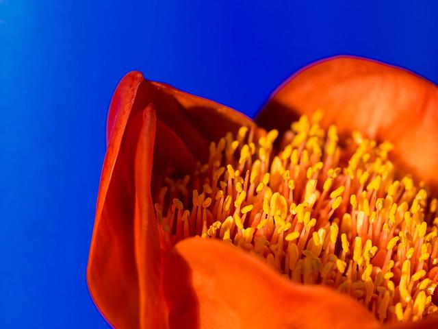 Macro Mondays Orange and Blue