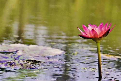 Gwangokji Lotus Theme Park   by travel oriented