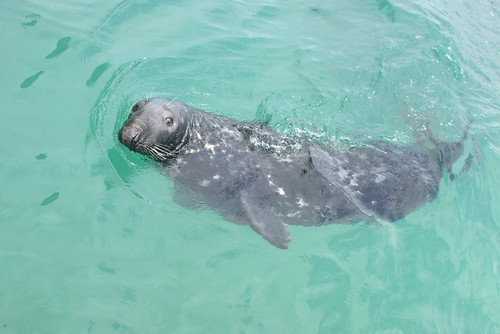 Grey Seal | by DuncanGreenhill