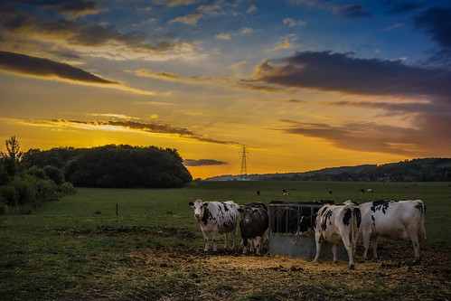 sunset summer england sun tree field clouds prime kent nikon cows hay 35mmf18 d7100 lightroom55
