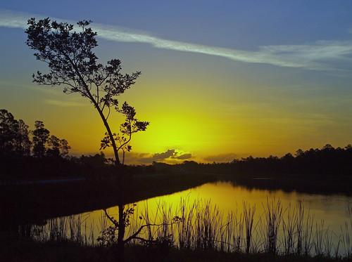 sun tree sunrise canal florida bent martincounty joneshungryland