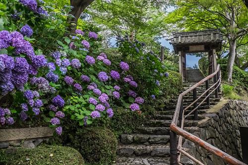 flowers summer floral colors japan landscape temple kyoto day steps nopeople doorway 京都 日本 fujifilm hydrangea 1855mm pathway 夏天 紫陽花 あじさい yoshiminedera xt1 善峰寺