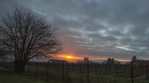 christmas sunrise sunshine trees grapes morning clouds red farmland outside landscape hopewelloregon