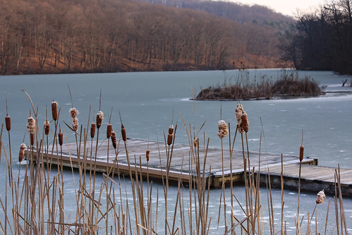 commonwealthpa pennsylvania westernpa pa boatdock winter raccooncreekstatepark kwtracyghostship clinton unitedstates us cattails dock jetty lake frozen sunrise cold forlorn lonely serene water landscape goldenlight perspective america wonder scale reeds lakescape boating weatheredwood rural nature shore country brown