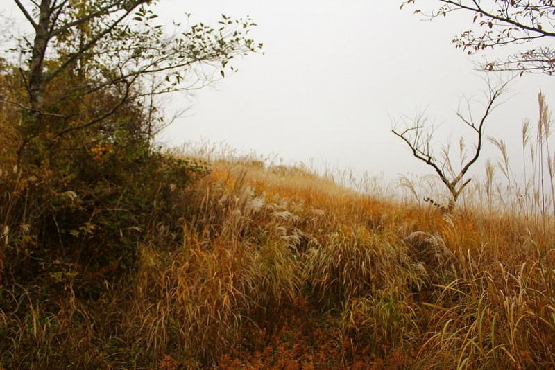 三国山の登山道