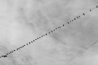Birds chatting   by Julien.Belli