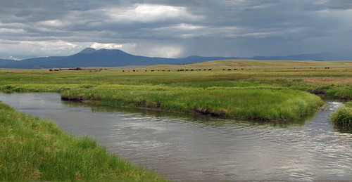 ranch mountain mountains river colorado cattle south meadow meadows co platte southplatte southplatteriver hartsel hartselcolorado hartselco