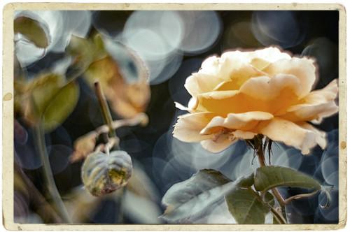 Bokeh Summer - Lomography Petzval lens & Nikon D90 - for JT