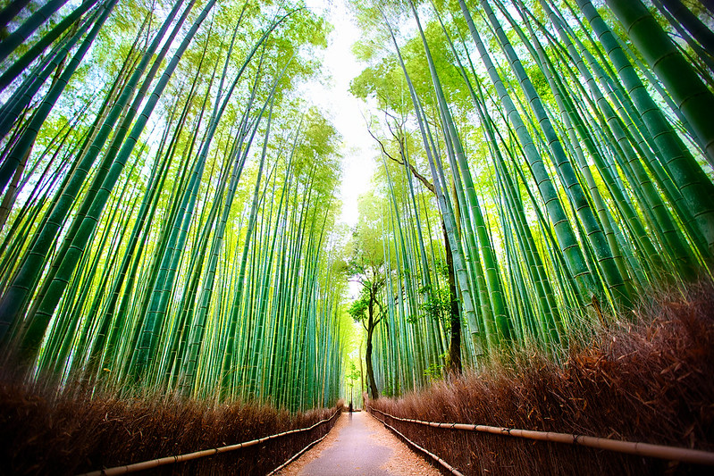 Arashiyama Bamboo Forest in Sagano, Kyoto, Japan