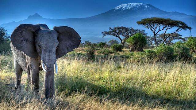 Elephant and Mt. Kilimanjaro, Amboseli National Park, Kenya