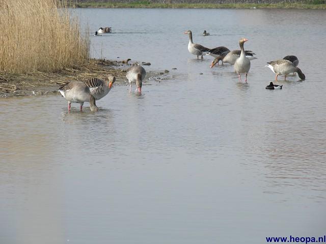 24-03-2012 rs'80 Bleiswijk 25 Km  (45)