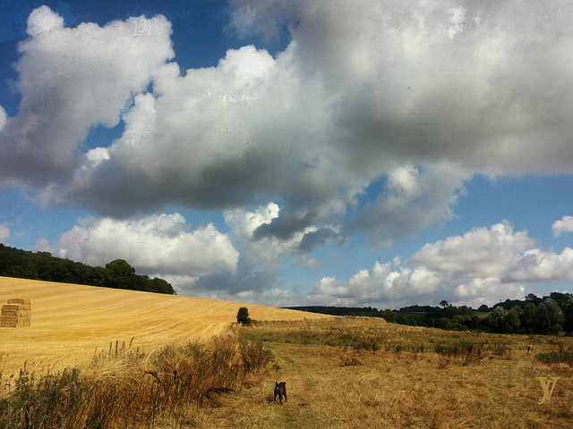 - - - - an  ode  to  the  English  countryside  1/4  - - - -  Happy is England
