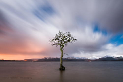 tree nighttime wintertime lochlomond milarrochy peterribbeck2014nikkor1424mm