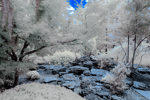 canon garden ir texas unitedstates outdoor infrared botanicalgarden beaumont tyrrellpark lifepixel