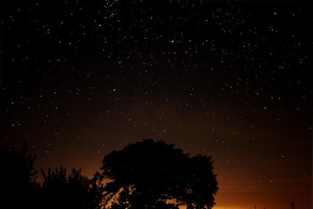 Starry Tree Silhouette