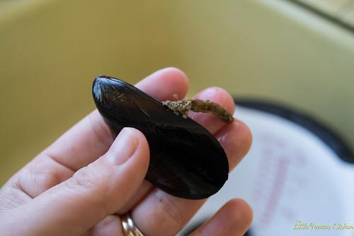 Julia Child's Mussels Mariniere via LittleFerraroKitchen.com | by FerraroKitchen1