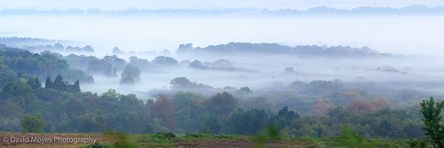 england mist misty forest sunrise woodland dawn sussex east ashdown