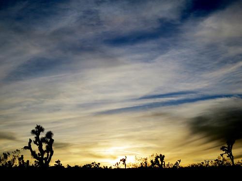 california sunset usa joshuatree