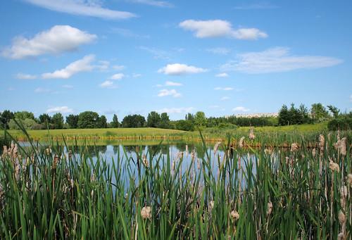 canada pond olympus saskatoon saskatchewan cattail omd bulrush em5