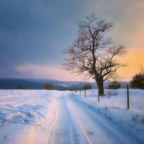 road winter light sunset snow tree nature landscape lights hungary snowy magyar magyarország