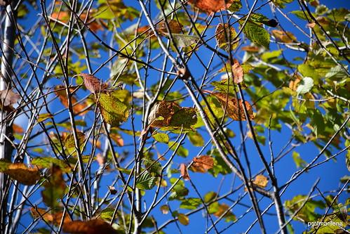 DSC_9276 Autumn's coming on the road to Prato Valentino, Valtellina
