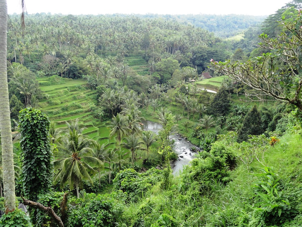 Ayung Valley River, Ubud   Ayung Valley from Sayan Terrace, …   Flickr