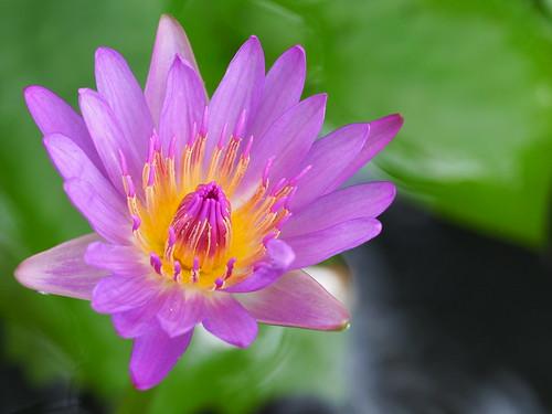 紫色的驚歎。