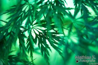 Grün | Projekt 365 | Tag 170