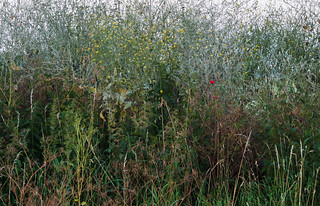 grassscape | by apalca