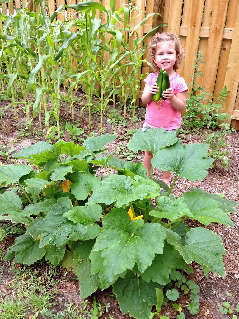 nora's zucchini