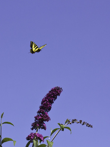 Visit by a Monarch | by Rod Raglin