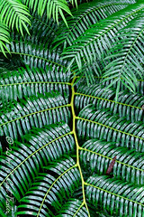 Giant Fern Frond by umijin