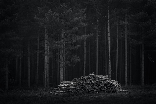 Remembrance - Shortlisted: Outdoor Photographer of the Year 2014