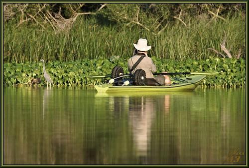 reflection heron nature birds texas wildlife sony bayou kayaking pasadena canoeing paddling tricoloredheron a77 waterhyacinth armandbayou kayakphotography gseloff sonya77 wanam3