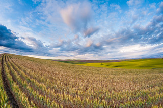 Palouse field | by Northwest dad
