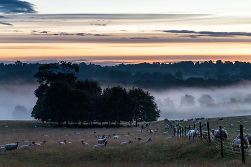 uk trees mist nature sunrise walking landscape hall nikon sheep britain derbyshire 85mm national trust nikkor f18 derby kedleston beacheslandscapes