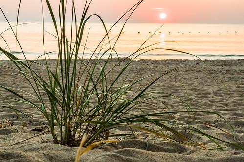 ocean sea sun beach grass sunrise northcarolina killdevilhills