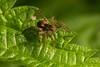 Lycosidae sp. by Owen Llewellyn