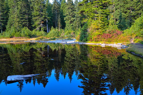 blue sky lake reflection tree leave water grass scenery first mount seymour picturesque firstlake