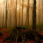 Orange Hill Wood