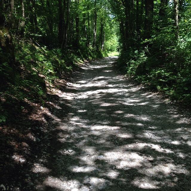 #LaCornue2015 : demain très beau parcours dans les sous-bois au pied du Cornafion. #stPauldeVarces #grenoble #trail