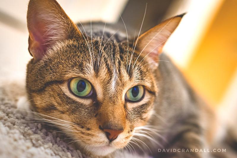 Ichi the Kitty