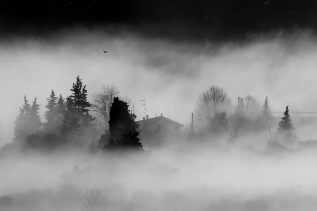 Marcialla in the myst (this morning)