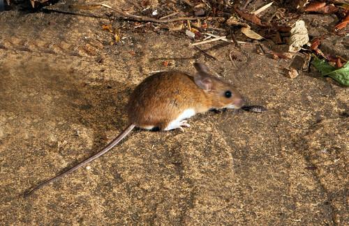 Field mouse meets Woodlouse