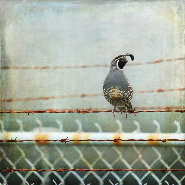 sittin' on the fence . . .